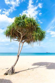 Nilaveli beach, Sri Lanka - paradise on earth! [photography by Mondomulia]