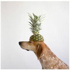 playful pineapple | dog