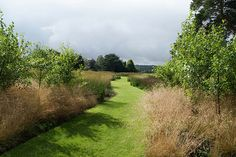 Trentham grass path. Garden design -  Piet Oudolf? T2: The man is a master.