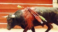 Ban Bullfighting in Almonte!