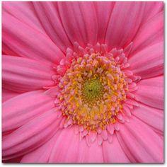 Trademark Fine Art Pink Canvas Art by Kurt Shaffer, Size: 24 x 24, Multicolor
