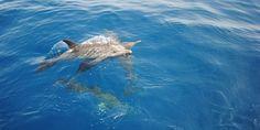 Tre delfini trovati morti in pochi giorni sulle spiagge toscane