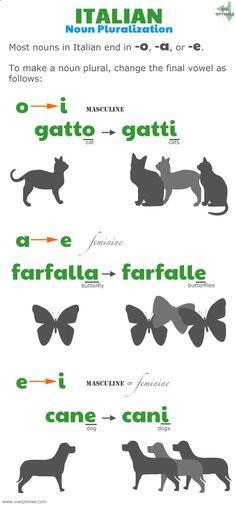 Italian pluralization patterns, Italian plurals: o to i, gatto to gatti; a to e, farfalla to farfalle, e to i, cane to cani; www.viaoptimae....