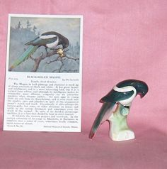 Magpie Canadian Tender Leaf Tea Premium Number 8 Figurine plus Bird Postcard Number 8, Magpie, Worlds Largest, Auction, Birds, Tea, Things To Sell, Bird, Eurasian Magpie