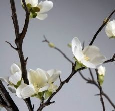 branches with small flowers - Google Search