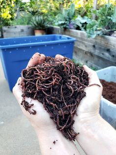 Vermicomposting 101: How to Create & Maintain a Simple Worm Compost Bin