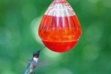 Blog Post: How to Attract Hummingbirds to Your Backyard! Flowers Hummingbirds Like, How To Attract Hummingbirds, Attracting Hummingbirds, Wild Bird Feeders, Humming Bird Feeders, Glass Hummingbird Feeders, Bird Book, Bird Species, Wild Birds