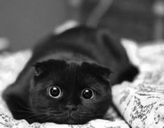 Black cat - looks ready to play & attack whatever is in front of him. CUTE !!!!