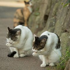 Japans stray cats i