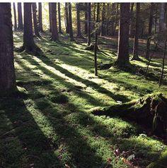 Eine helle Lichtung mit Moos, wildem Erika und den Geräuschen des Waldes ist die Heimat von von ERIKA. Hier sind viele Ideen rund um das Interiorlabel geboren worden. #interior #design #clearing #woods #forest all rights reserved by von ERIKA. www.von-ERIKA.de