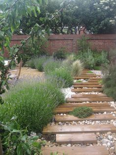 I think I want irregular edges of path, but don't want it to look like this, and not with the wood standing proud of mulch. Nice lavender though