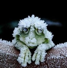 Aw, look! It's an Alaskan Tree Frog, whose heart stops when it literally freezes in the winter: | 24 Pictures That Prove Nature Is Literally Fucking Nuts