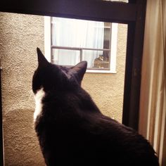 Cute! Cat love from a distance.