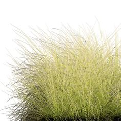 tall grass Google sk cutouts Pinterest