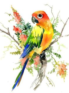 Sun Conure Parakeet and Hoya original one of a kind watercolor artwork pet birds bright colors illustration conure