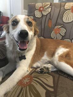 My happy best friend Penny Dog! http://ift.tt/2qSKIQ6