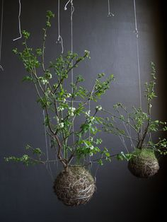 Gardening is constantly being reinvented into new forms, amazing! Here are hanging string gardens.
