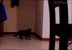 Exceptional Parkour Cat. | The 15 Funniest Cat GIFs Of The Summer