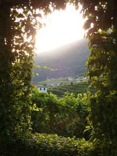 peaceful wine country-italy