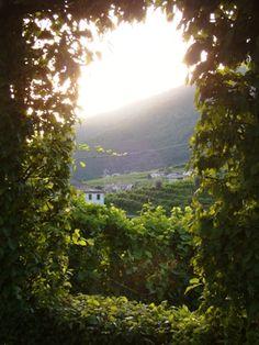 The Valpolicella wine region - home to the famed Amarone and Recioto wines