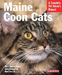 Maine Coon Cats-spitting image of henry