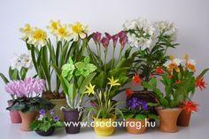Clay flower - Colors, shapes and sizes ... Agyagvirág - Színek, formák, méretek... Clay Flowers, Flower Tutorial, Handmade Flowers, Diy Flower, Plants, Cold Porcelain, Plant, Planets