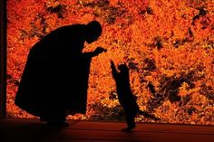 Cat reaches for Dalai Lama Beautiful Places In Japan, Beautiful Places To Visit, Beautiful World, Hiroshima, Kyoto, Animals And Pets, Cute Animals, Aesthetic Japan, Japanese Landscape