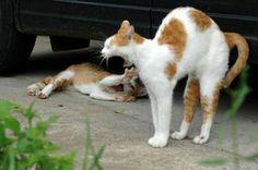 くわぁっとあいたお口にきゅんっ! ネコのあくびまとめ - NAVER まとめ