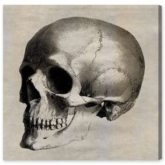 Found it at Wayfair - Skull Side by Oliver Gal Graphic Art on Canvas