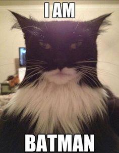 Batman also has a cat TWIN!!!!
