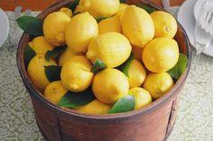 Citrus Yellow Lemons in a bucket