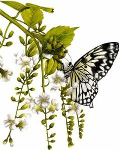 Winners of the Painters-Online and Leisure Painter Butterfly Painting Competition Announced - Paper Kite Butterfly on Jasmine by Amanda Jones