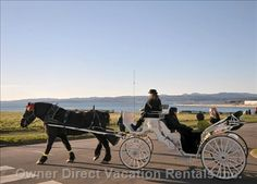 vacation rentals to book online direct from owner in . Vacation rentals available for short and long term stay on Vrbo. Horse Drawn, Vancouver Island, Rental Apartments, British Columbia, Victoria, Horses, Pets, Vacation Rentals, Regional