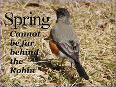 Robin Proclamation by cedarlili.deviantart.com on @deviantART