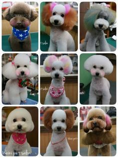 -repinned- Asian inspired dog grooming