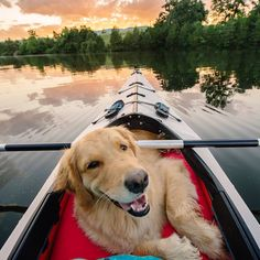 My dream is to have a dog that goes with me everywhere even kyaking and paddle boarding