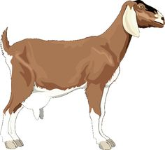 Quality Clip Art of Animals That Live On A Farm: Goat