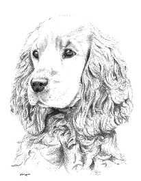 "Képtalálat a következőre: ""cocker spaniel drawing"" Dog Memorial Tattoos, Golden Cocker Spaniel, Dog Artist, Cockerspaniel, Black And White Dog, Spaniel Puppies, Feather Painting, Dibujos Cute, Dog Portraits"