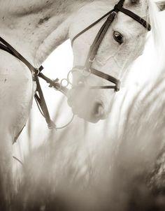 fine art - © Raphael Macek Photography 2013