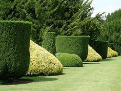 Garden Hedges, Topiary Garden, Boxwood Topiary, Garden Trellis, Garden Paths, Cool Landscapes, Beautiful Landscapes, Beautiful Gardens, Outdoor Landscaping