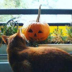 🎃 #cat #mycat #giselle