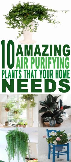 These are the BEST air purifying plants I've ever seen! Glad to have found these amazing air purifying house plants. Pinning for sure!