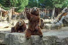 лапы медведя мультик: 13 тыс изображений найдено в Яндекс.Картинках