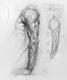 Arte Com Grey's Anatomy, Arm Anatomy, Human Anatomy Drawing, Human Figure Drawing, Body Anatomy, Life Drawing, Arm Muscle Anatomy, Figure Drawing Tutorial, Arm Drawing