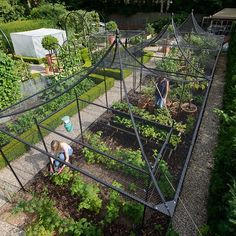 Our Peak Roof Heavy Duty Steel Decorative Fruit Cage has elevated fruit growing to a higher echelon by seamlessly blending the strength and durability of our standard heavy duty walk-in steel fruit cages with the graceful sweeping lines of the unique peak