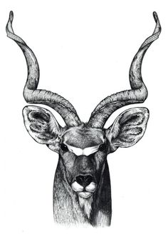 A gemsbok of the Kalahari Bushmen. It is benign and peaceful and helps the tribe to keep wild dogs away by stabbing its antlers towards them. Animal Sketches, Art Drawings Sketches, Animal Drawings, Hirsch Illustration, Deer Illustration, Bugs Bunny Drawing, Deer Head Tattoo, Bull Tattoos, Deer Art