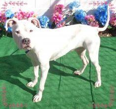 DESIREE-FRIENDS OF SHELTER ANIMALS FOR COBB COUNTY 1060 Al Bishop Drive Marietta, GA 30008 ckersey533@aol.com