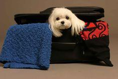 Viajar con el perro al extranjero - http://www.mundoperros.es/viajar-con-el-perro-al-extranjero/