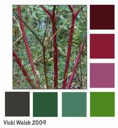 Pokeberry bush