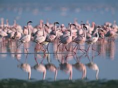 new unesco world heritage site: lakes of kenya's great rift valley